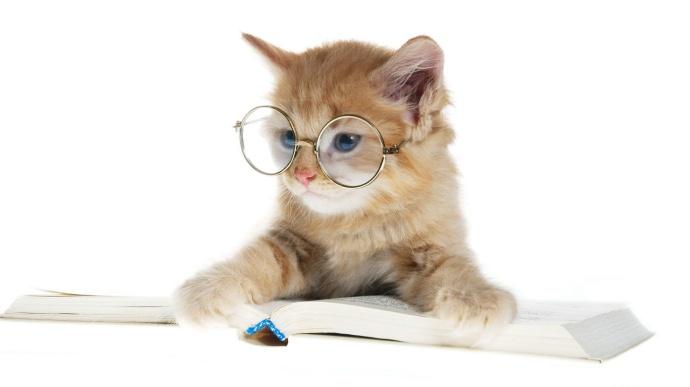 Gato inteligente estudando
