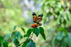 Lentes Naturais / Foto: Taynara Nascimento