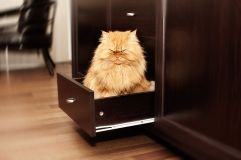 garfi-evil-grumpy-persian-cat-18__700