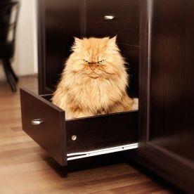 garfi-evil-grumpy-persian-cat-18__700