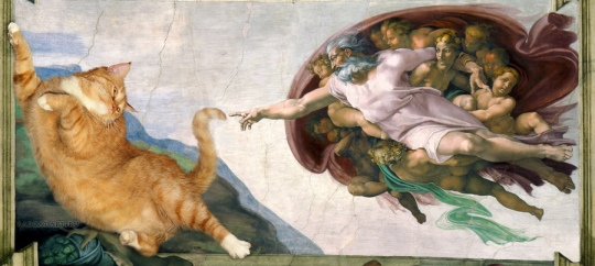 Michelangelo_-_Creation_of_cAt-dam-cat-w1