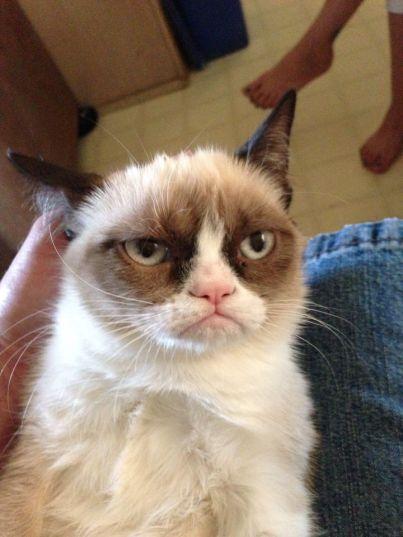Primeira foto postada da Grumpy Cat, em 2012