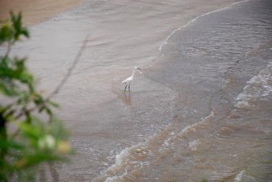 Praia de Camburi, ES. Fonte: Ingrid Nerys