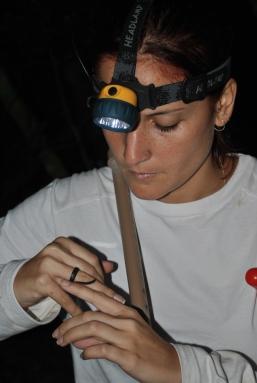 o campo de um projeto de pesquisa com anfíbios de folhiço (chão da floresta), realizado no município de Atílio Vivacqua, ES.