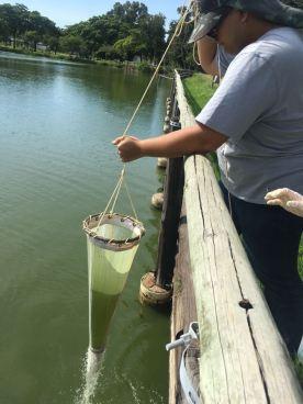 Alunos coletando microalgas em aula de campo realizada na Lagoa da Ufes