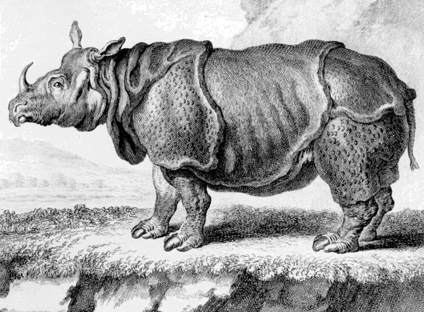 Imagem-de-rinoceronte-indiano-reproduzida-na-Histoire-naturelle-de-Buffon-baseada-em-uma