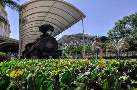 Trem em frente ao arbusto / Foto: Ian Santos