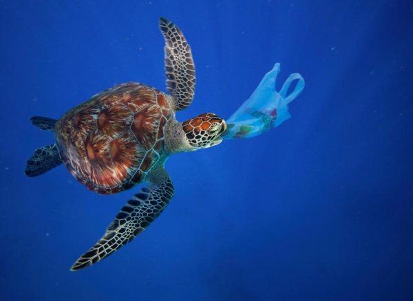Tartaruga comendo plástico. Um perigo ambiental. Foto: Internet - @ Alamy/ SOTT