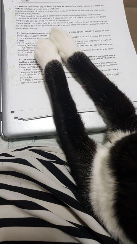 Nico corrigindo prova
